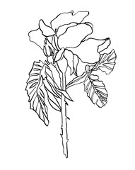 Decorative ink drawing rose flower with leaves