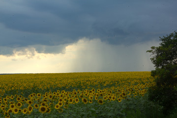 Summer is accompanied by rain and thunder. Before the rain and thunder.