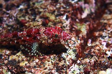 nudibranch clam underwater photo macro