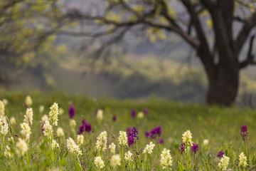 Clourfool flowers under the tree
