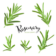 Branch of green rosemary leaves on white background template. Vector set of element for advertising, packaging design of condiment products.