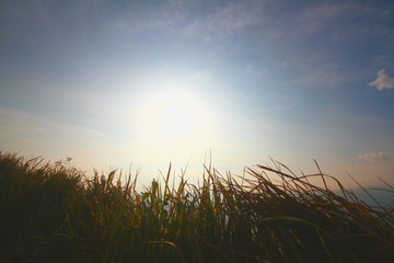 Silhouette of grass field with sunrise and against blue sky background