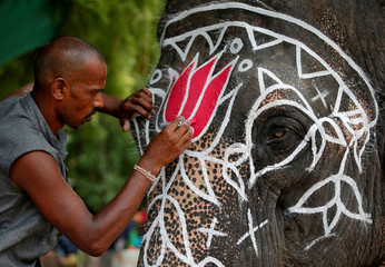 A mahout paints his elephant on the eve of the annual Rath Yatra, or chariot procession, outside the Jagannath temple in Ahmedabad
