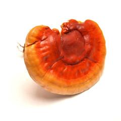Lingzhi mushroom, ganoderma lucidum