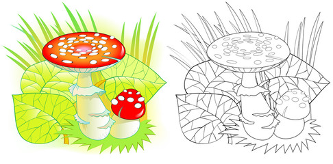 Colorful and black and white pattern for coloring. Drawing of poisonous mushroom. Worksheet for children and adults. Vector image.