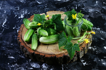 Fresh green cucumbers, Flower cucumber on a round wooden stump. Isolated on dark background. Top view. Copy space