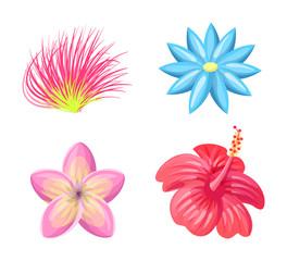 Plumeria Flowers Tropic Set Vector Illustration