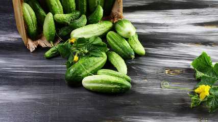 Fresh cucumbers poured out of a wooden box with green leaf and flower. Isolated on dark background. Flat lay, space for text