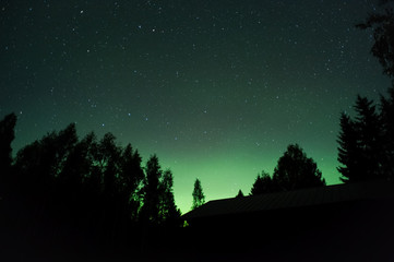 Aurora borealis and stars above forest silhouette