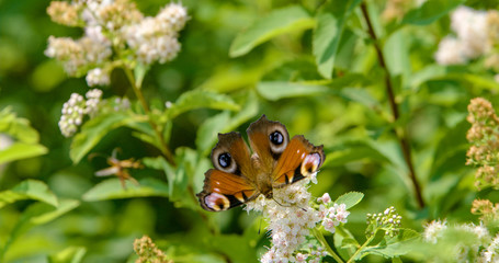 funny insect attacking butterfly
