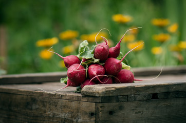Fresh radish on a wooden box in the home garden. Green background from flowers and grass. Organic fresh vegetables.