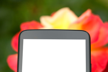 A smartphone with the blank screen in front of a rose