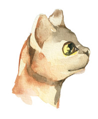 watercolor sketch of cat isolated on white background