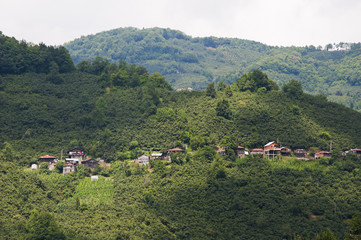 Small village between green hills in capital city of nut Giresun