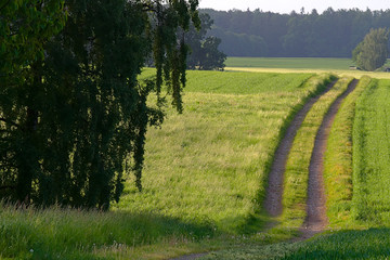 Track through green meadows in agriculture environment