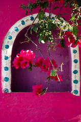 Bougainvillea flowers in front of a pink stucco alcove in Puerto Vallarta, Mexico