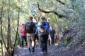 Unrecognizable Tourist trekking in Rangitoto Island New Zealand
