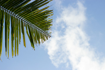 Green palm leaf on a blue sky with white cloud