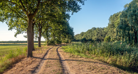 Sand road with cart tracks along a row of trees