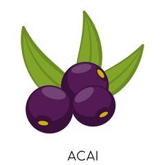 Black Acai berry flat icon isolated on white background. Exotic fresh amazon nutrition. Eco delicious food. Vector illustration