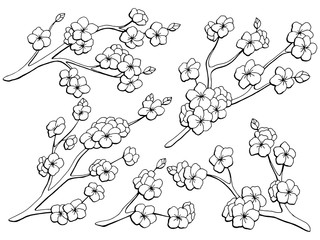 Sakura graphic flower branch black white isolated sketch set illustration vector