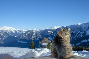 Katze in der Winterlandschaft