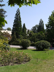 sunny day in a park with green clipped bushes and beautiful spruce trees