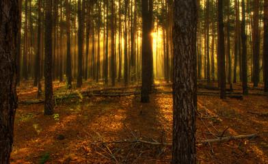 Autumn sketches. Landscape. Autumn colors. Sun rays.
