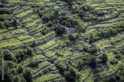 Paesaggio di collina con terrazzamenti\