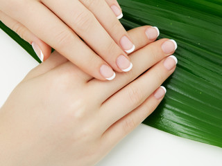 Beautiful delicate hands with manicure and green leaves, closeup isolated on white. Photo of a female hand at spa salon on manicure. Professional French manicure.