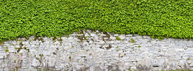 Schöne alte Parkmauer mit Efeu bewachsen
