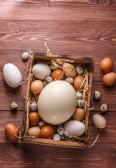Eggs from different birds, place for wording