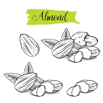 Hand drawn sketch style almond set. Single, group seeds, almond in nutshells group. Organic nut, vector doodle illustrations collection isolated on white background..