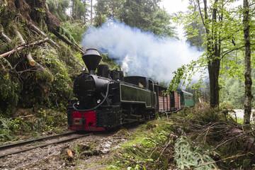 Steam Train in Woods