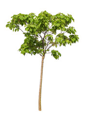 tree on a white background