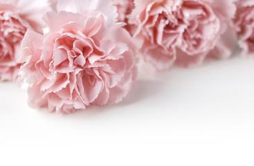 Carnation flowers on white background