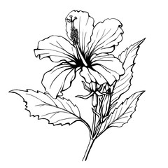 Hibiscus flower (also known as rose of Althea or Sharon, rose mallow) Black and white outline illustration hand drawn work isolated on white background.
