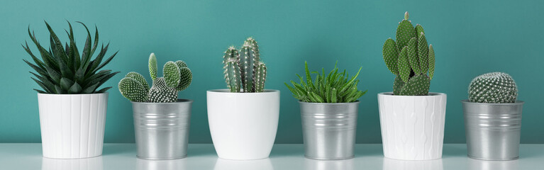 Papiers peints Cactus Modern room decoration. Collection of various potted cactus house plants on white shelf against pastel turquoise colored wall. Cactus plants banner.