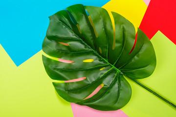 Green Mostera leaf