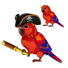 Red parrot in a cocked hat pirate with a telescope. Tropical tamed bird is isolated on a white background. Animated vector illustration.