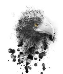 Steller's sea eagle pait on tablet