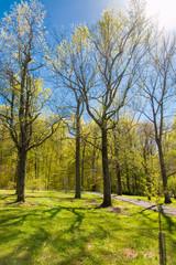 Spring season in park.