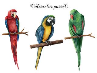 Watercolor beautiful three parrot. Hand painted red, blue-and-yellow and green parrot isolated on white background. Nature illustration with bird. For design, print or background.