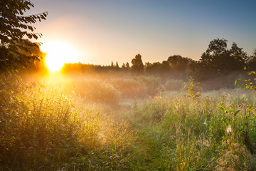 summer landscape with sunrise and forest and meadow