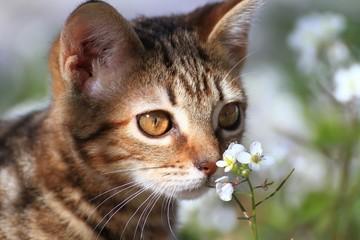 Common kitten playing around flowers in the garden.