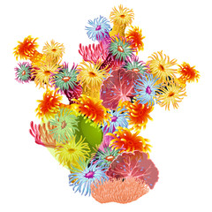A colorful composition of marine corals and polyps. Bright inhabitants of the deep sea is isolated on a white background. Vector illustration.