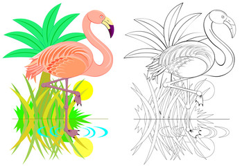 Colorful and black and white pattern for coloring. Illustration of cute flamingo. Worksheet for children and adults. Vector image.