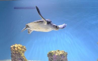 Picture of Sea Turtle