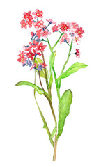 watercolor illustration of wildflowers, gentle isolated drawing from the hands of meadow plants