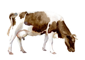 watercolor illustration of a cow in a village, isolated drawing by hand of an animal cattle